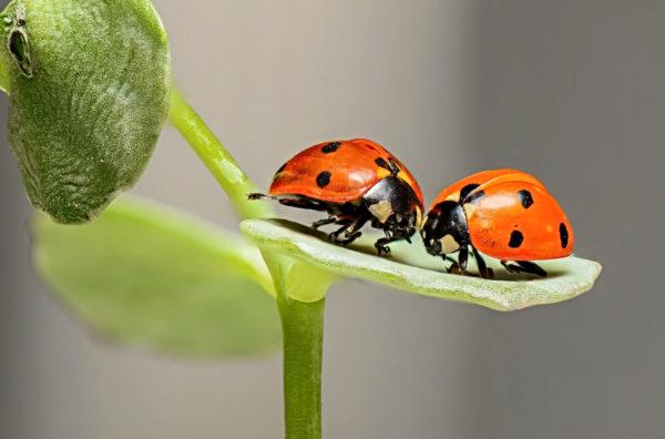 Insetos para o combate de pragas: segundo o Ministério da Agricultura, os bioinsumos são utilizados em dez milhões de hectares no País. Foto: Pixabay