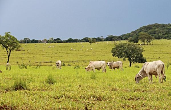 A agropecuária brasileira, segundo a ministra da Agricultura, Tereza Cristina, está se preparando para atender, de forma integral, as boas práticas ambientais, sociais e de governança. Foto: Pixabay