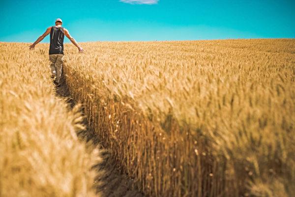 Trabalhador no campo: diminuição da mão de obra no agro em meio à pandemia não desestabilizou o setor, segundo o Cepea. Foto: Pixabay