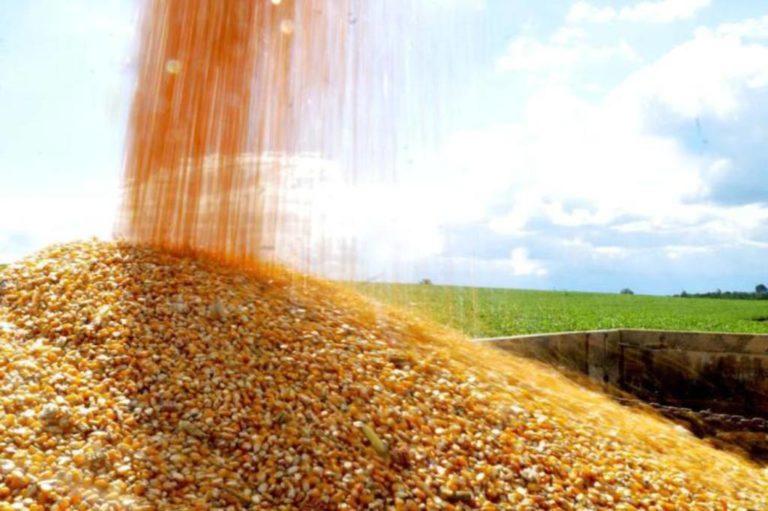 O atraso das chuvas pode afetar o desempenho do milho 2ª safra, cuja produção está estimada em 8,6 milhões de toneladas / Foto: Divulgação