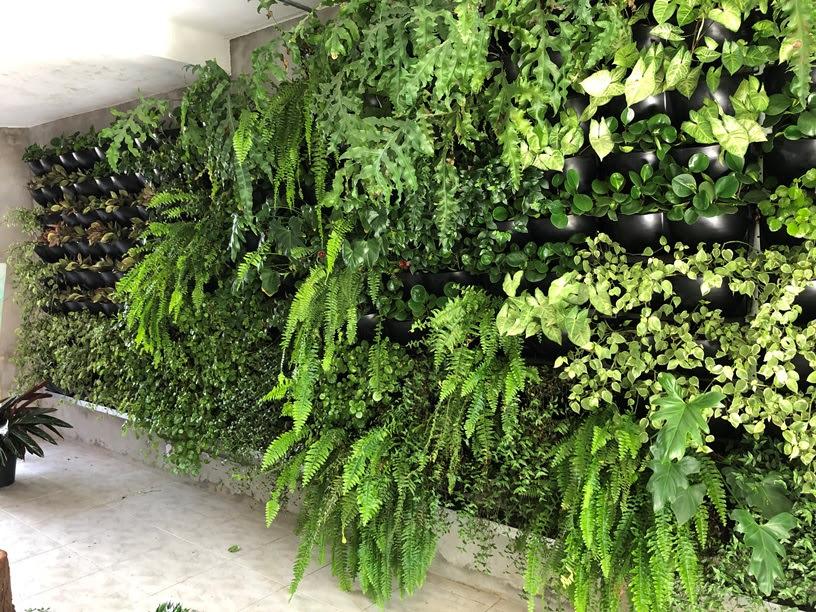 Jardim vertical também pode ser cultivado em fachadas e telhados. Foto: Divulgação Ecotelhado