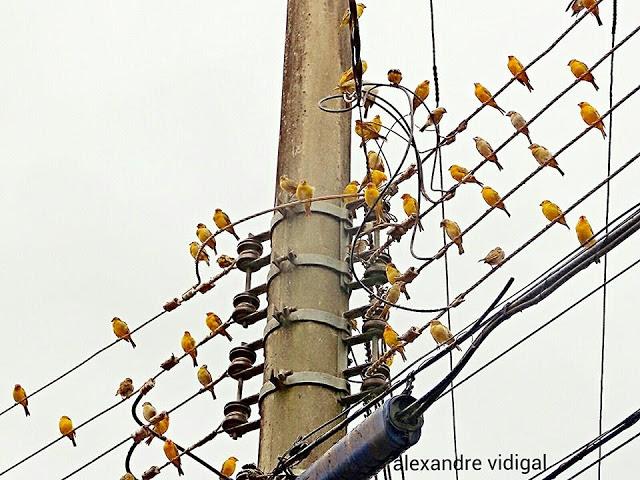 Foto: Divulgação/Alexandre Vidigal